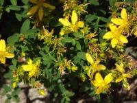 kwiat_549