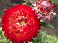kwiat_551