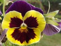 kwiat_552