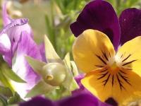 kwiat_553