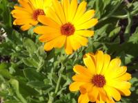 kwiat_554