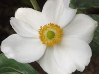 kwiat_560