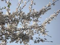 kwiat_561