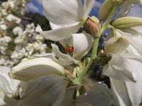kwiat_563