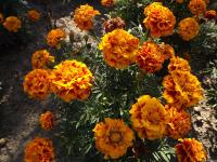 kwiat_564