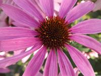 kwiat_565