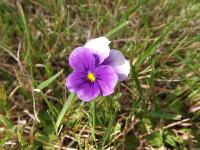 kwiat_568