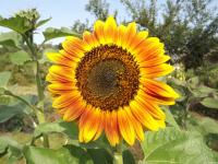kwiat_570