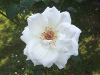 kwiat_571