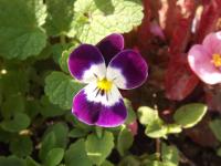 kwiat_572