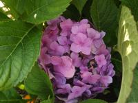 kwiat_573