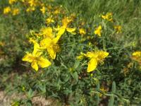 kwiat_574
