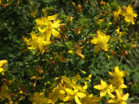 kwiat_575