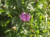 kwiat_577