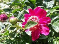 kwiat_579