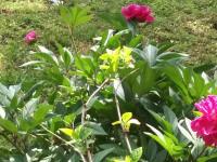 kwiat_580