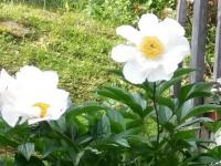 kwiat_581