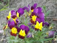 kwiat_582