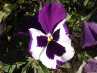 kwiat_583