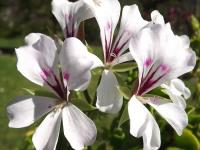 kwiat_587