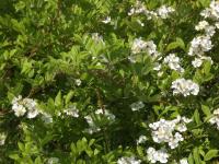 kwiat_589