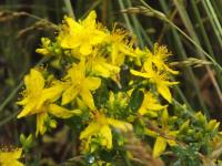 kwiat_594
