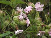 kwiat_595
