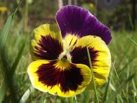 kwiat_626