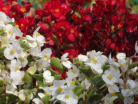 kwiat_629