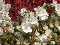 kwiat_630
