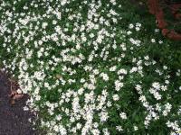 kwiat_632