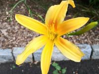 kwiat_635