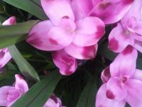kwiat_636