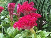 kwiat_639