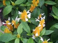 kwiat_643
