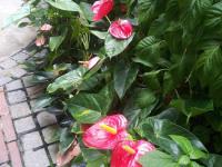 kwiat_644