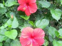 kwiat_645