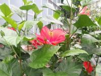 kwiat_646