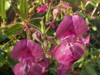kwiat_651