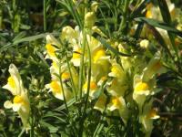 kwiat_658