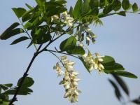 kwiat_663