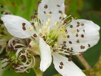 kwiat_665