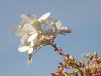 kwiat_668