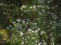 kwiat_670