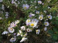 kwiat_672