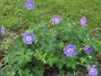 kwiat_683