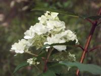 kwiat_685