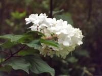 kwiat_686