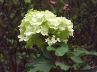 kwiat_688