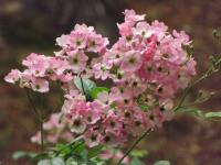 kwiat_689